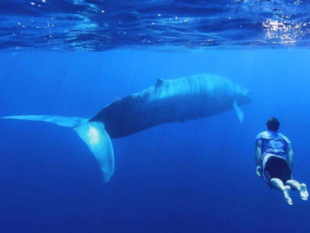 whale-swim.jpg