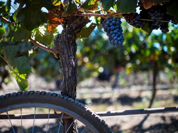 wine-vineyard.jpg