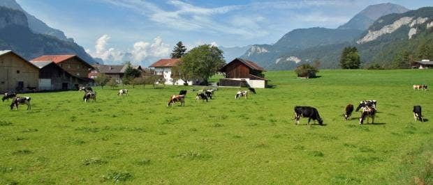 Rezultat iskanja slik za farming schwitzerland