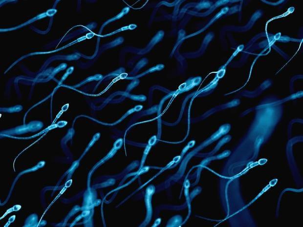 sperm-1.jpg