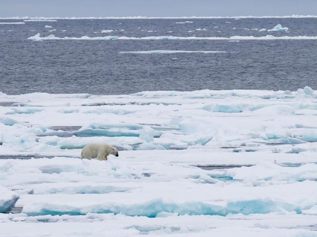 web-svalbard-sea-ice-rex.jpg