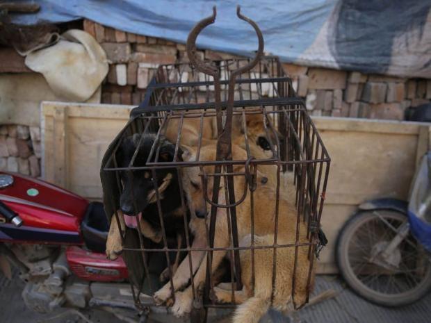 yulin-dogs.jpg