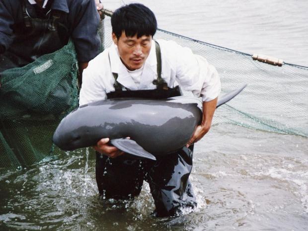 finless-porpoise.jpg
