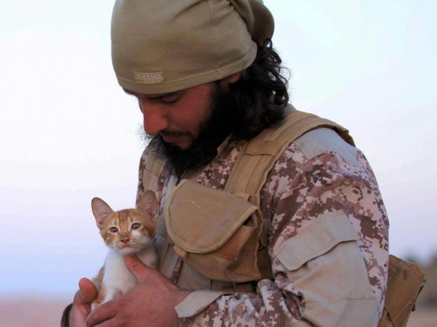dabiq-15-kitten.jpg