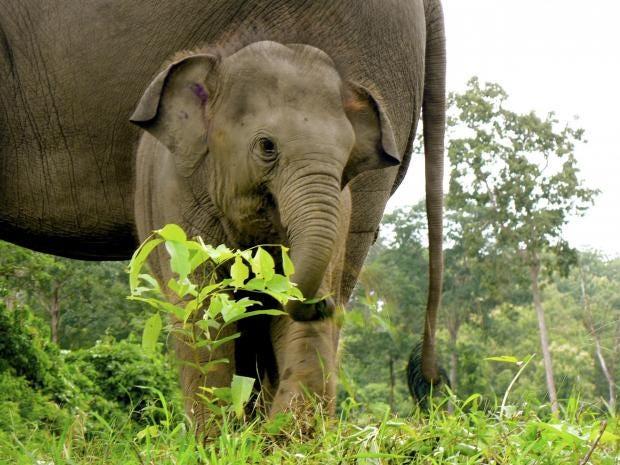 wap-elephant-1005514.jpg
