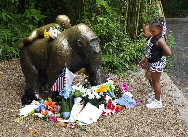 Funny Zoo Memes : Harambe: stop making memes of our dead gorilla cincinnati zoo