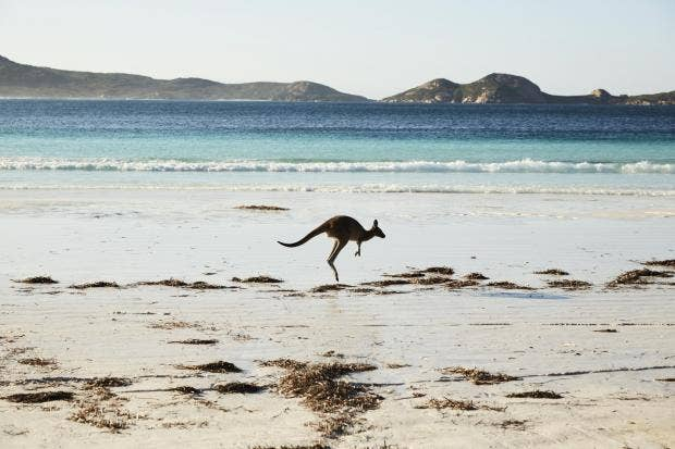 111931-kangaroo-at-lucky-bay-western-australia.jpg