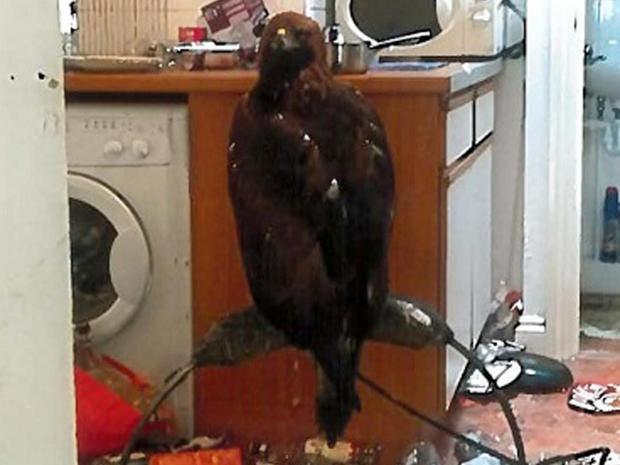 golden-eagle-kitchen.jpg