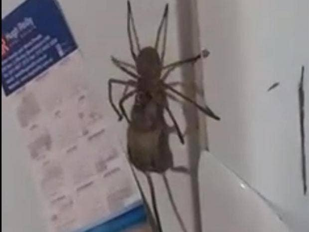 People Are Freaking Out Over This Video Of A Spider Eating ...