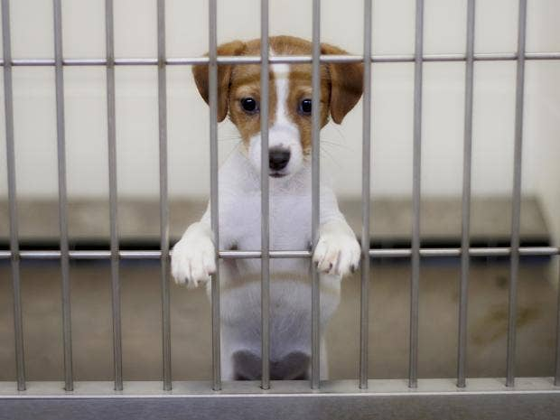 sale of puppies under eight weeks to be illegal in war on