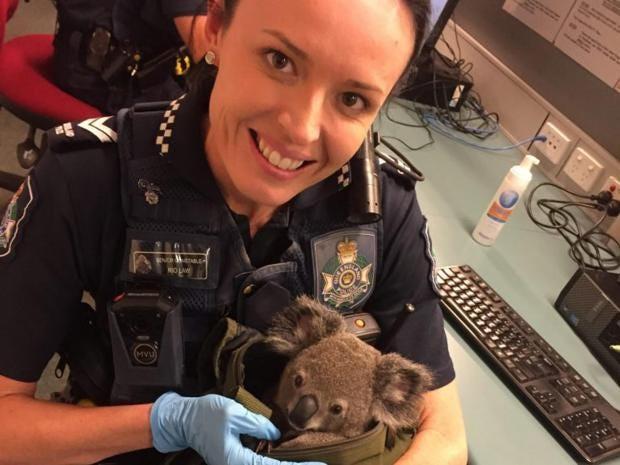 Police nab baby koala in arrest of Aussie woman