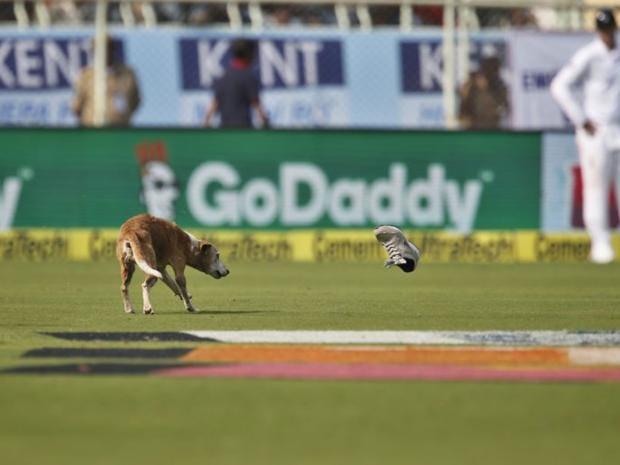 india-vs-england-dog-ap.jpg