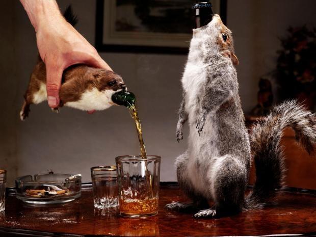 brew-dog.jpg