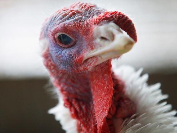 turkeys.jpg