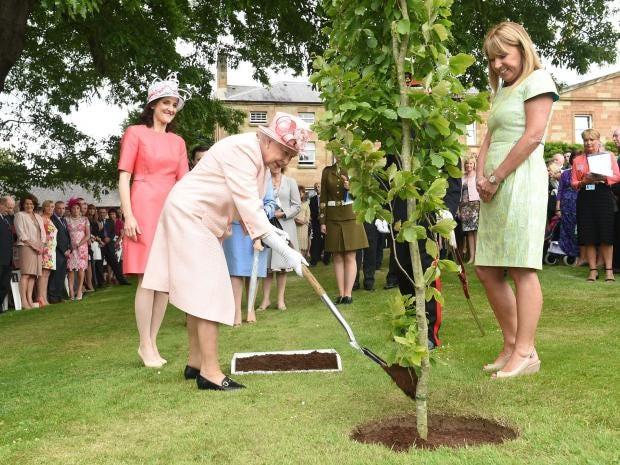 queen-tree.jpg