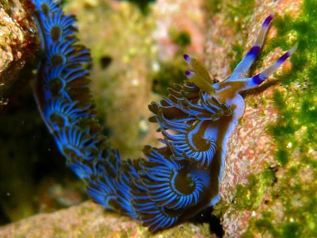 sea-slug-1.jpg