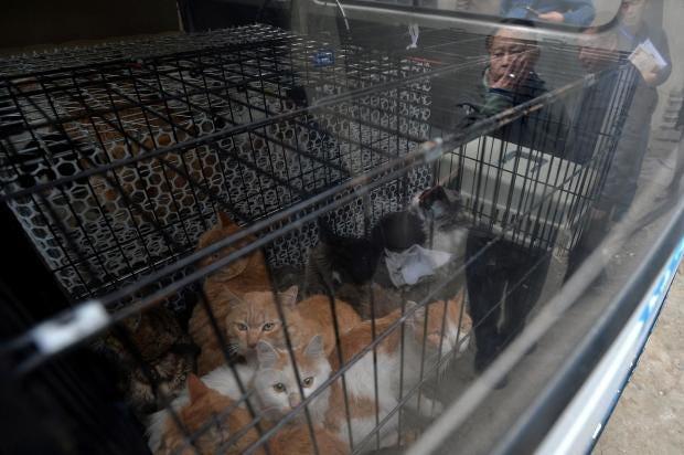 chengdu-cat-killer-china-pet-lover.jpg