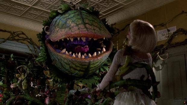 Believe It, Baby: 'Little Shop of Horrors' Is Getting a Remake