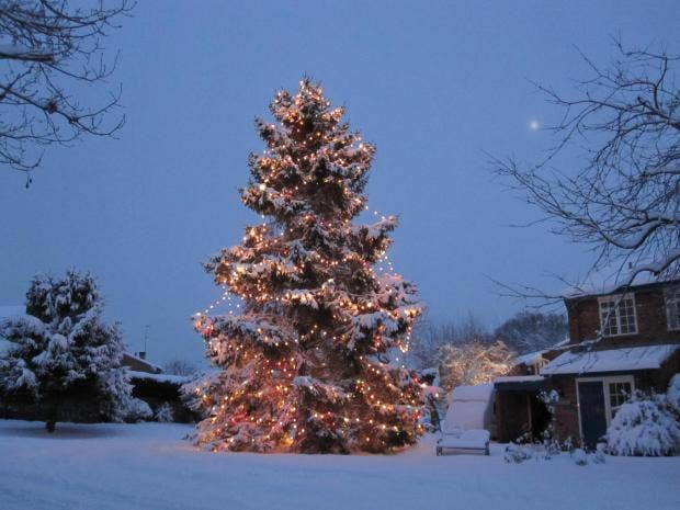 Christmas Tree Company Greytown : Couple plant christmas tree in outside their home