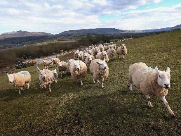 United Kingdom farming 'at risk' after Brexit, MPs warn