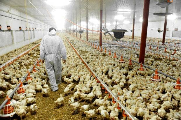 factory farms and animal cruelty The rise of factory farms resulted from policies made at all levels of government that prioritize large agribusiness over fair markets for farmers, animal welfare, public health or environmental protection.