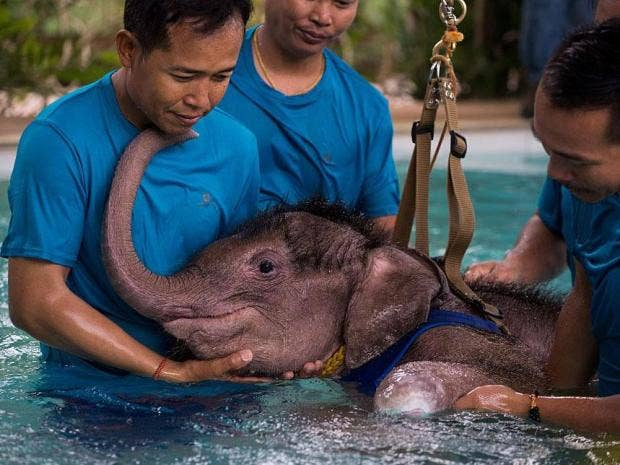 the-six-month-old-elephant-reached-out-to-her-keepers-for-support-roberto-schmidt-afp-getty-image.jpg