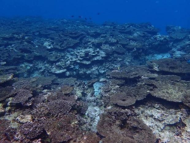coral-japan.jpg