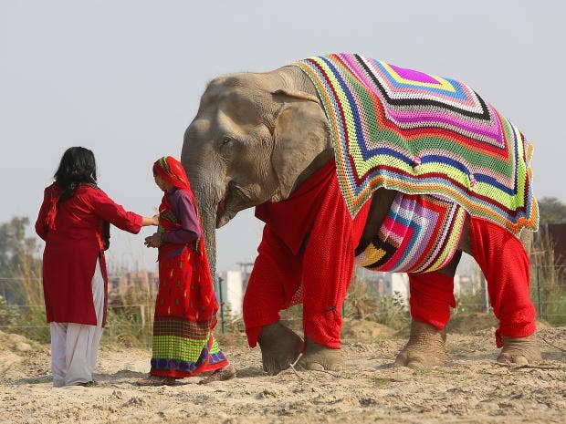 elephant-jumpers-4.jpg