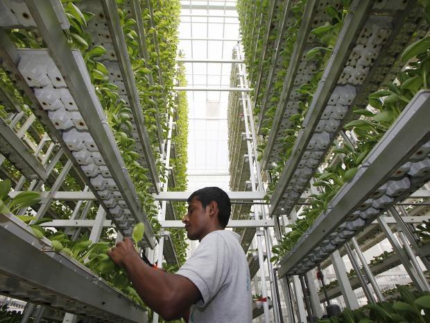 vertical-farming-2.jpg