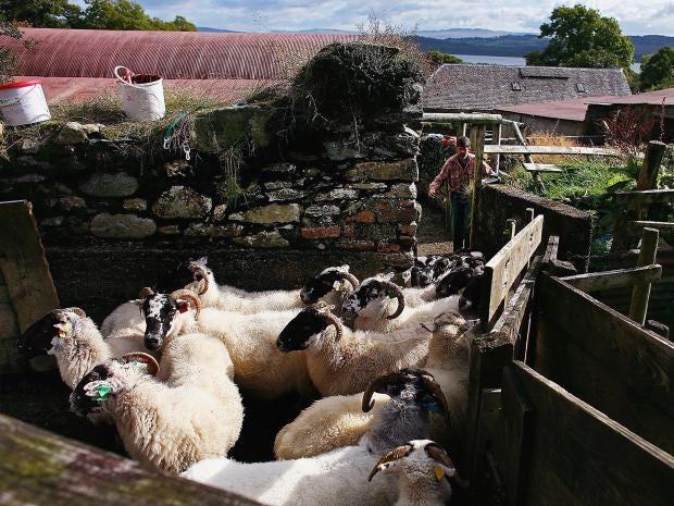 livestock-farm.jpg