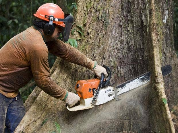 Tree surgeon dies from neck injury after chainsaw accident in south-east London