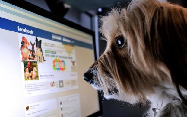 dogfacebook.jpg