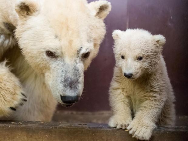 fritz-polar-bear-berlin.jpg