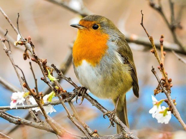 Cyprus poachers kill 2.3 million songbirds in 2016
