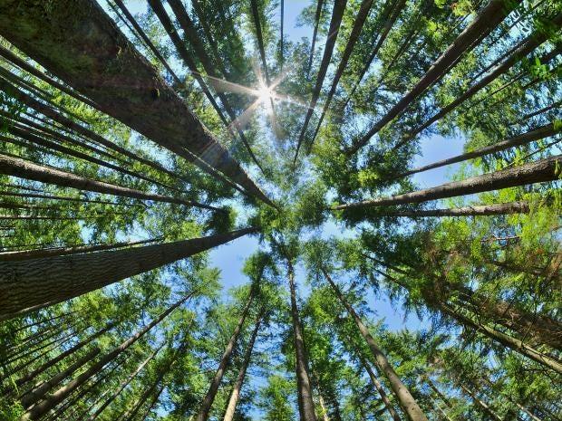forest-canada.jpg