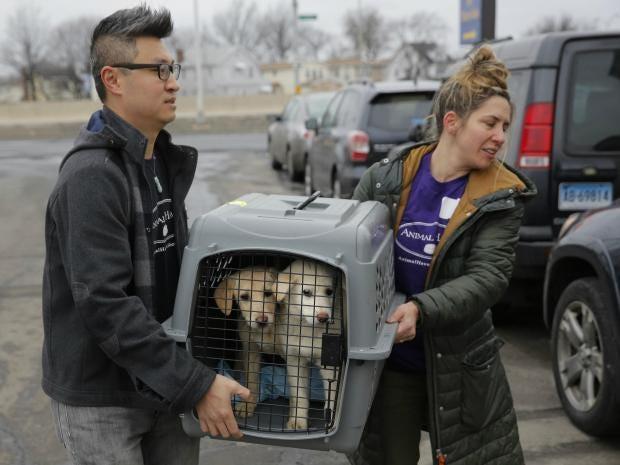 dog-meat-rescue.jpg