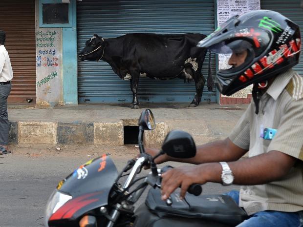 india-cow-motorcycle.jpg