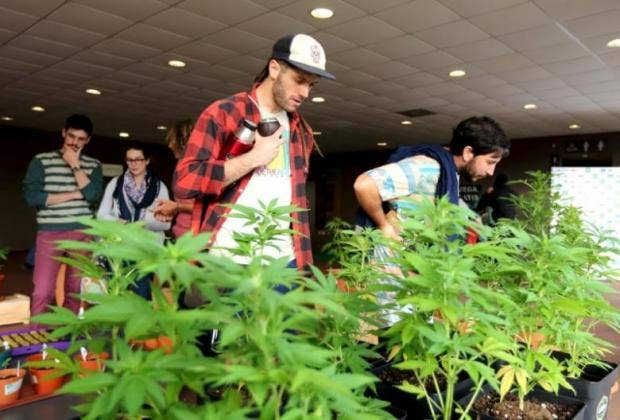 people-observe-marijuana-plants-while-visiting-the-expo-cannabis-forum-in-montevideo.jpg