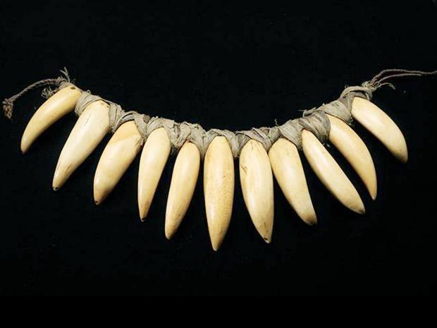 sperm-whale-teeth.jpg