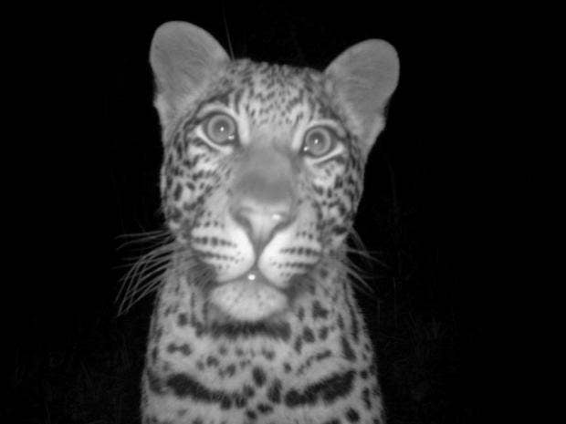 leopard-night-4.jpg