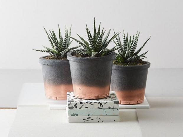 house plant lifestyle2jpg