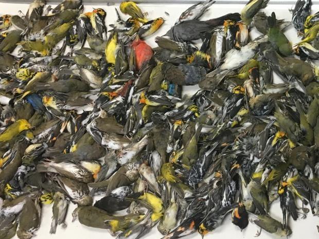 birds-dead-accident-texas.jpg
