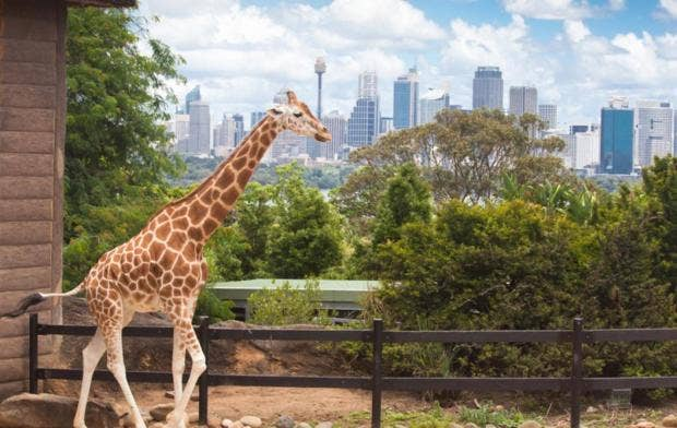 Image result for Learning from zoos – how our environment can influence our health