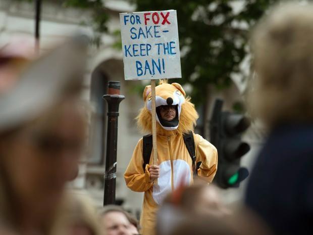 fox-hunting.jpg