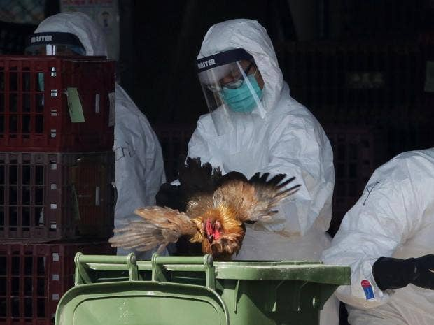 bird-flu-china.jpg