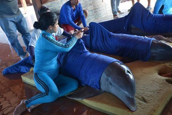 cuba-dolphins.jpg