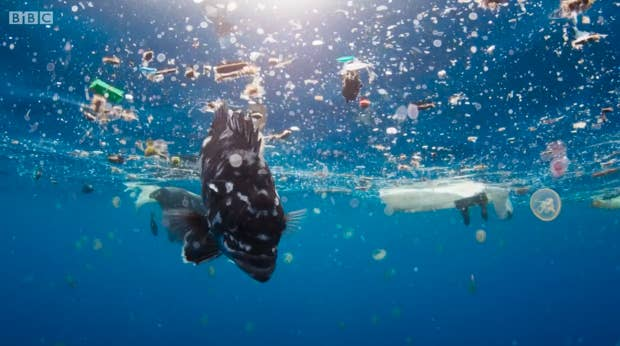 Blue Planet 2 Left Viewers Heartbroken After Showing The