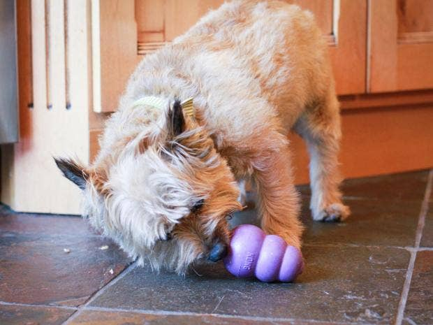 Best Fake Throw Ball Adorable Dog - lifestyle-0  2018_167463  .jpg