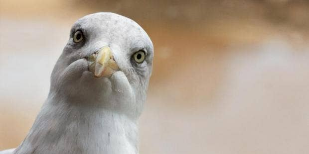 man goes viral after rescuing seagull which then attacked him
