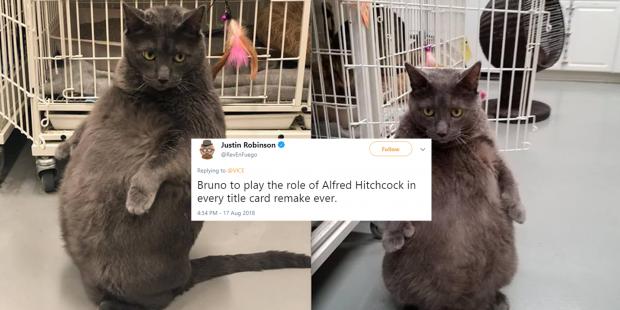 Meet Bruno The Big Super High Maintenance Cat The World Has Fallen